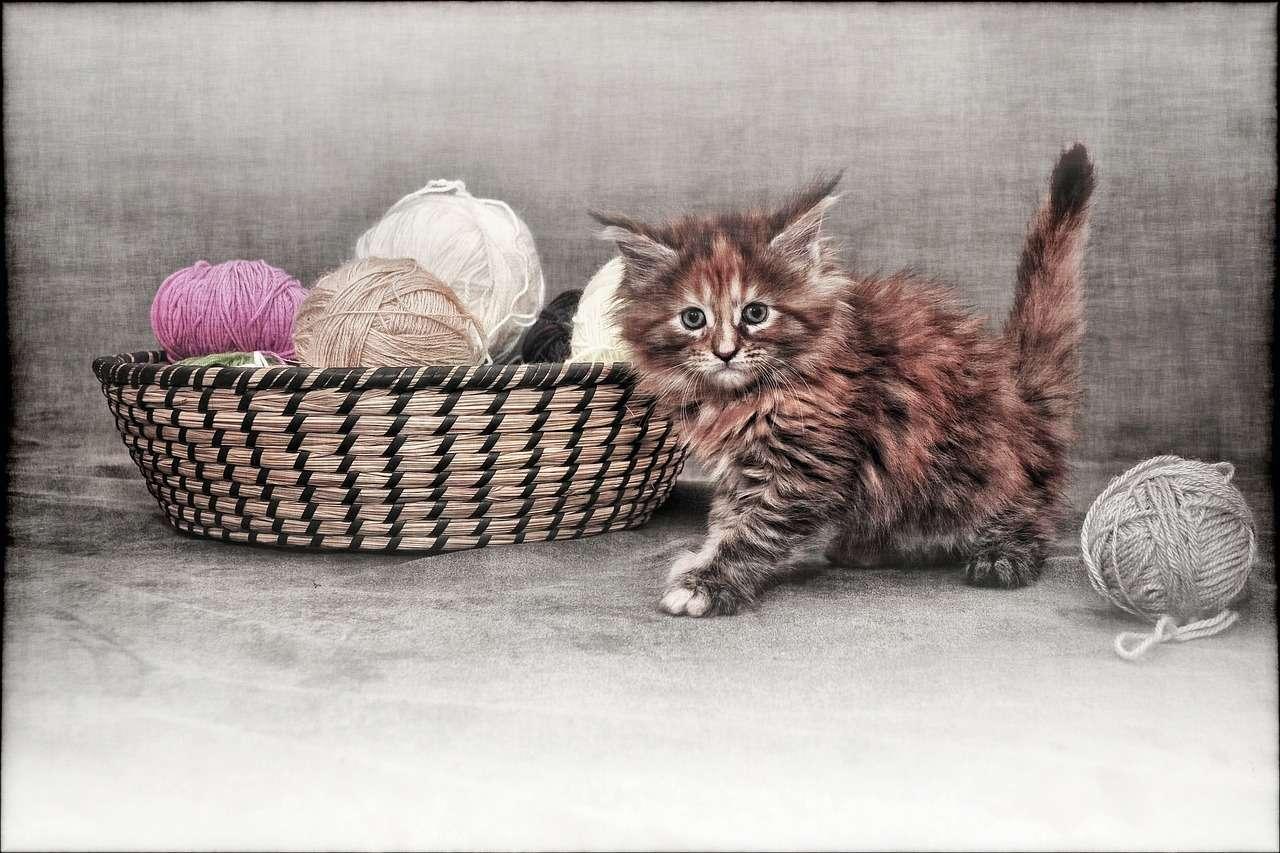 шерсть кот