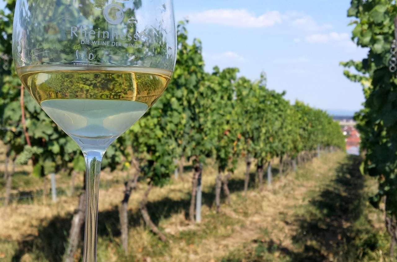 винный бокал на фоне виноградников