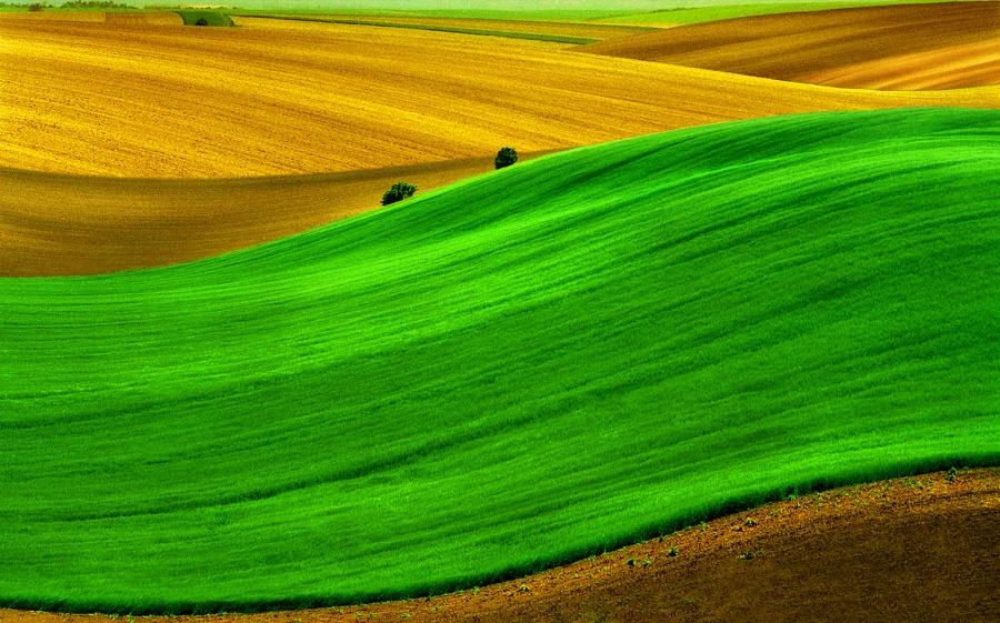 20 впечатляющих фотографий, на которых цвет – это главное