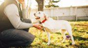 19 жестов, которыми собаки общаются с людьми