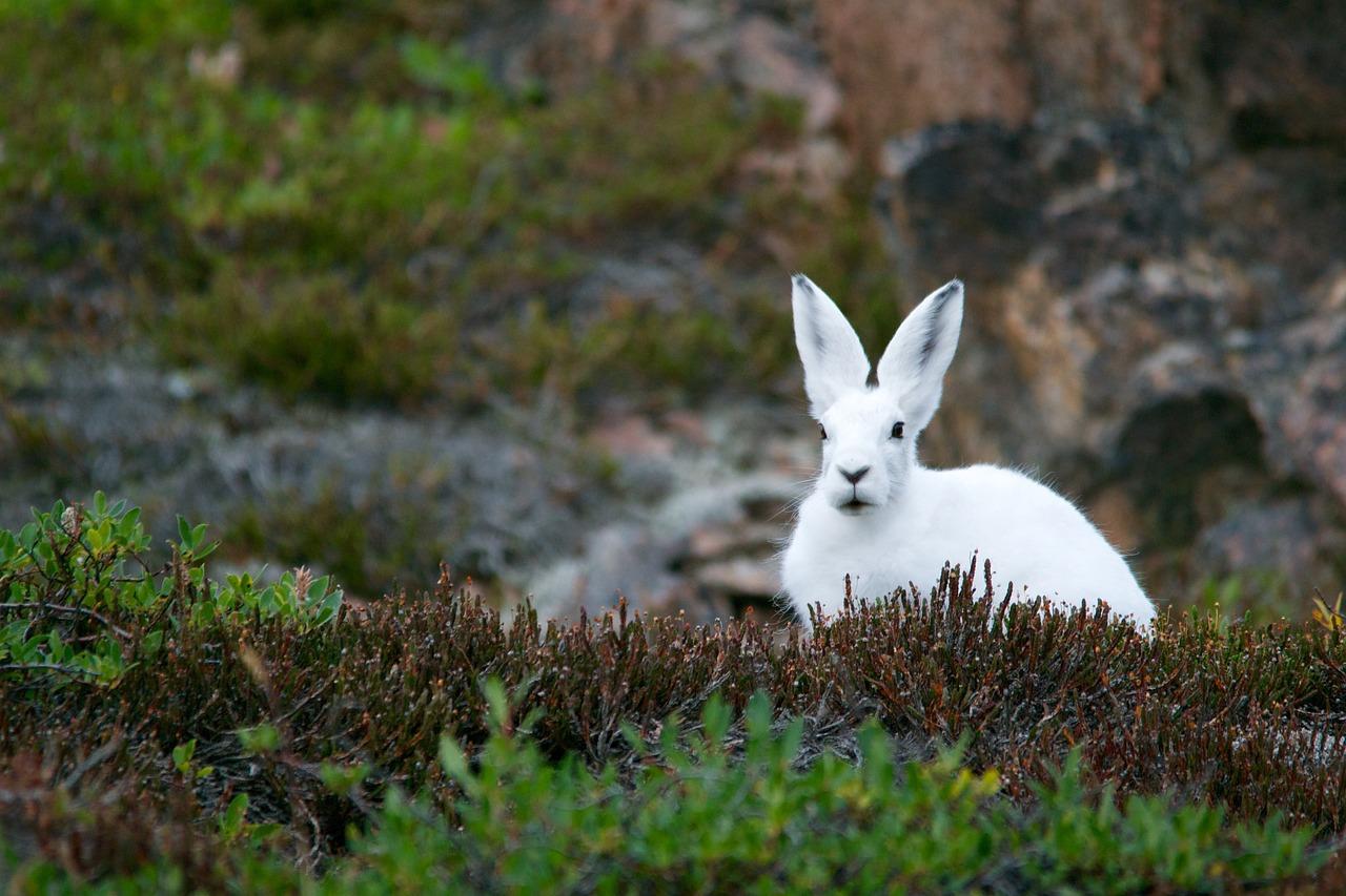 Интересные факты про кроликов и зайцев