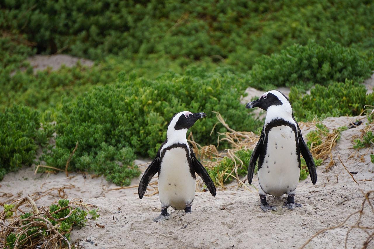 Интересные факты о пингвинах