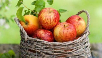 Интересные факты про яблоки